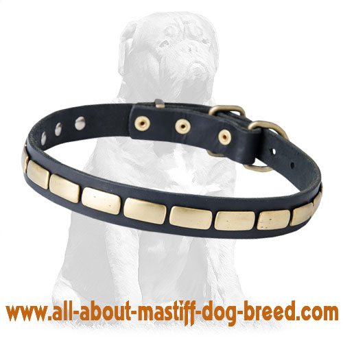 Designer Leather Mastiff Collar with Plates