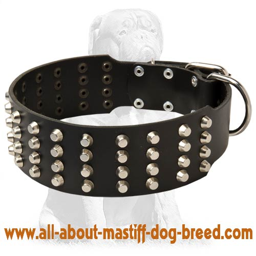 Wide Studded Leather Dog Collar-2 inch wide for Mastiff