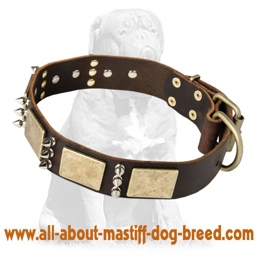 Mastiff Gorgeous Custom Leather Dog Collar with Brass Plates and Spikes