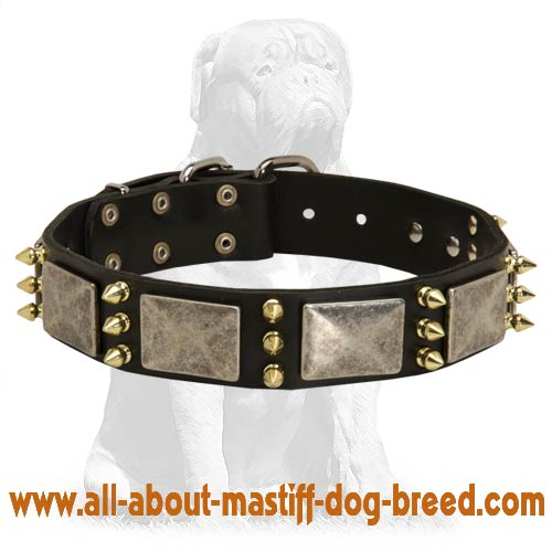 Gorgeous warlike leather collar