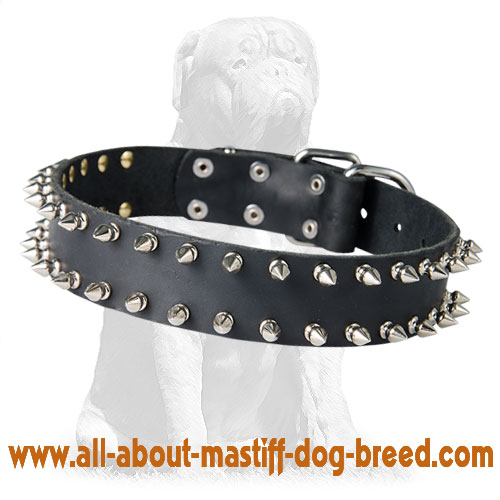 Mastiff Spiked Leather Collar for Walking