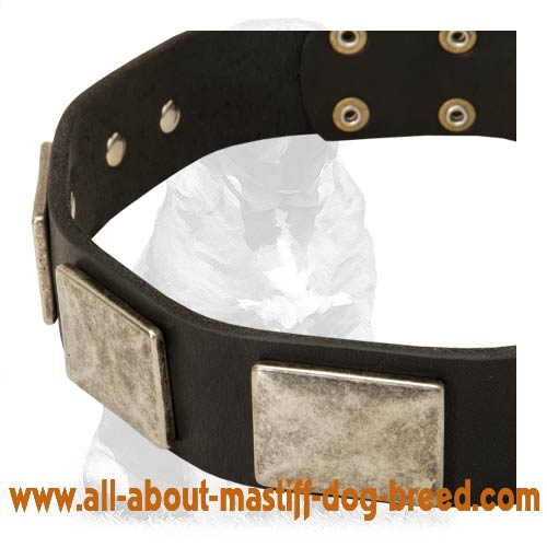 Handcrafted leather Mastiff collar with vintage plates
