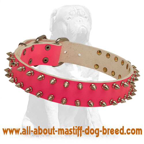 Mastiff Spiky Pink Leather Dog Collar