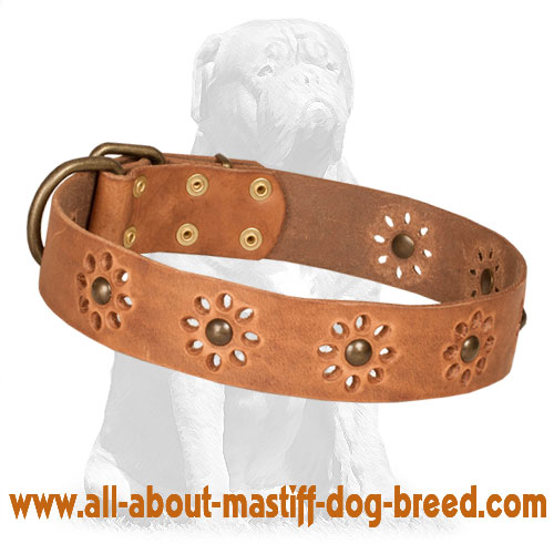 Mastiff Leather Dog Collar with Attractive Punched Flowers
