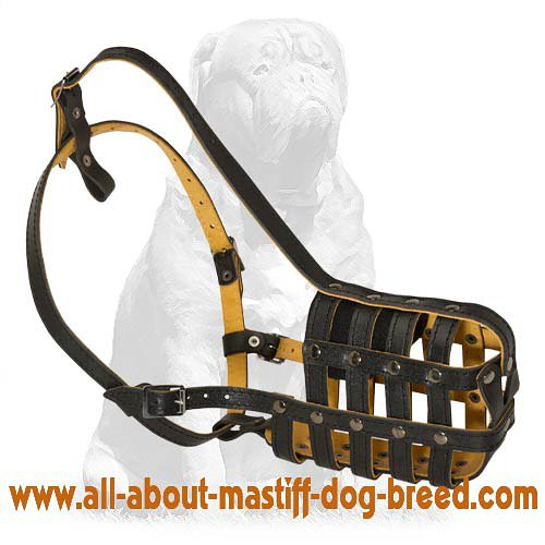 Mastiff Leather Basket Muzzle with Super Airflow!