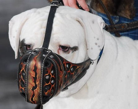 Hand-painted leather Argentinian Mastiff muzzle