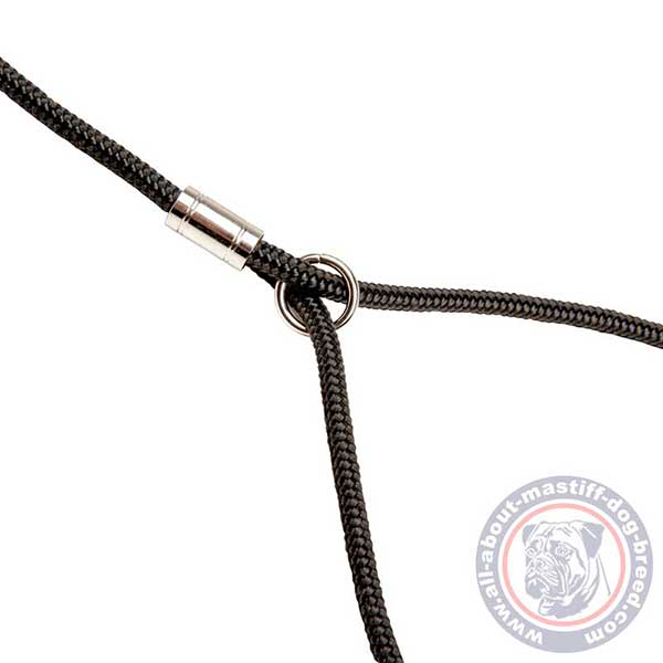 Round nylon combo leash for the show