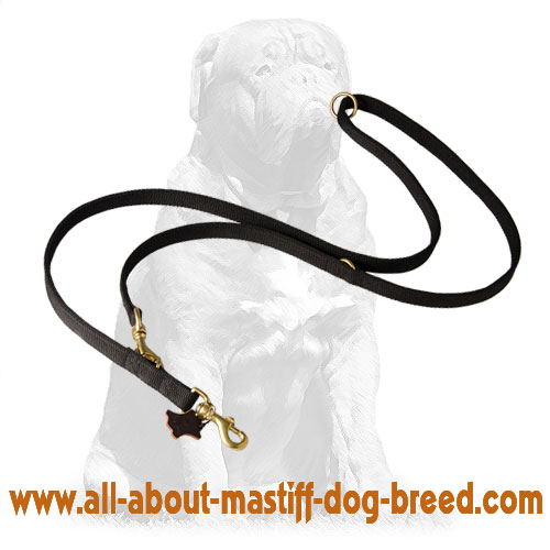 Reliable nylon dog leash with brass snap hook