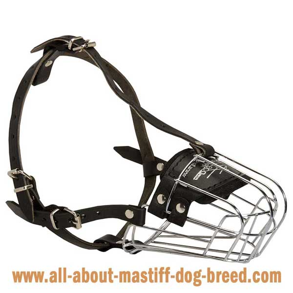 Comfortable soft Bullmastiff muzzle