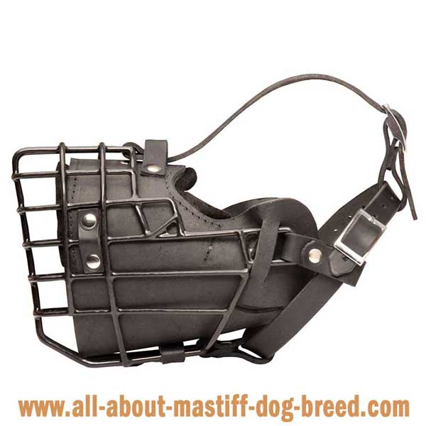 Anti-Freezing Muzzle for Cane Corso Mastiff