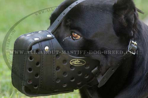 Cane Corso muzzle made of genuine leather with ventilation holes