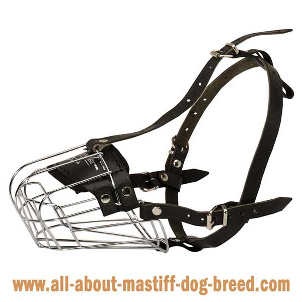 French Mastiff wire basket muzzle with supple straps