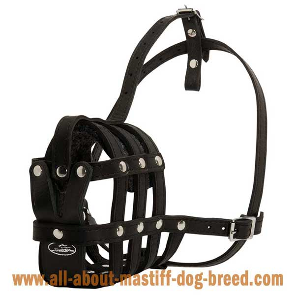 Light wight German Mastiff muzzle with 4 way adjustable straps