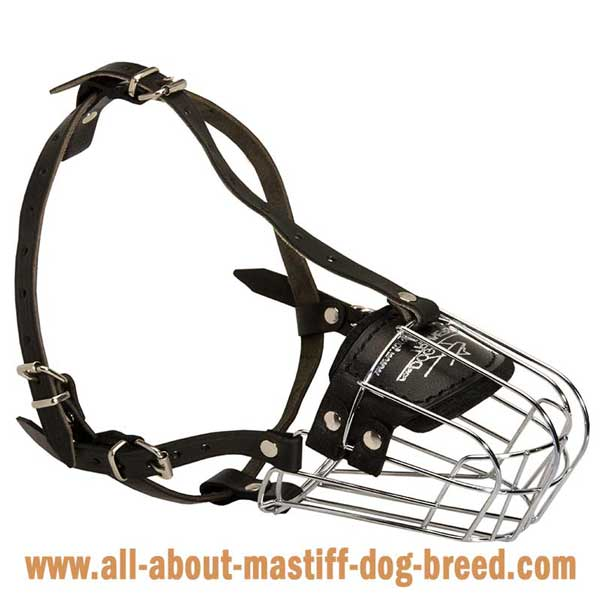 German Mastiff metal muzzle with adjustable straps