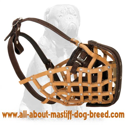 Leather dog collar safe and hypoallergenic
