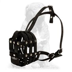 Mastiff breed muzzle for training sessions