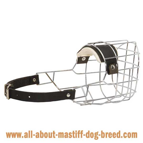 Bullmastiff Wire Basket Muzzle with One Strap Equipped