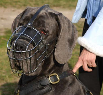 Wire basket muzzke for latge Mastiff dog