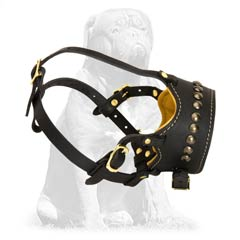 Stylish Bark Control Muzzle for your Mastiff