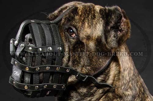 Comfy leather dog muzzle for Mastiff
