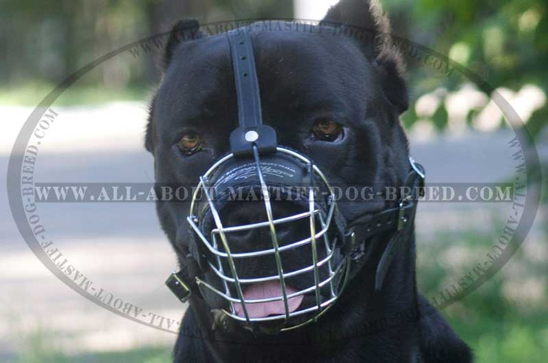 Comfy wire dog muzzle for Mastiff. Cane Corso ...