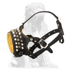 Mastiff dog muzzle of amazing quality