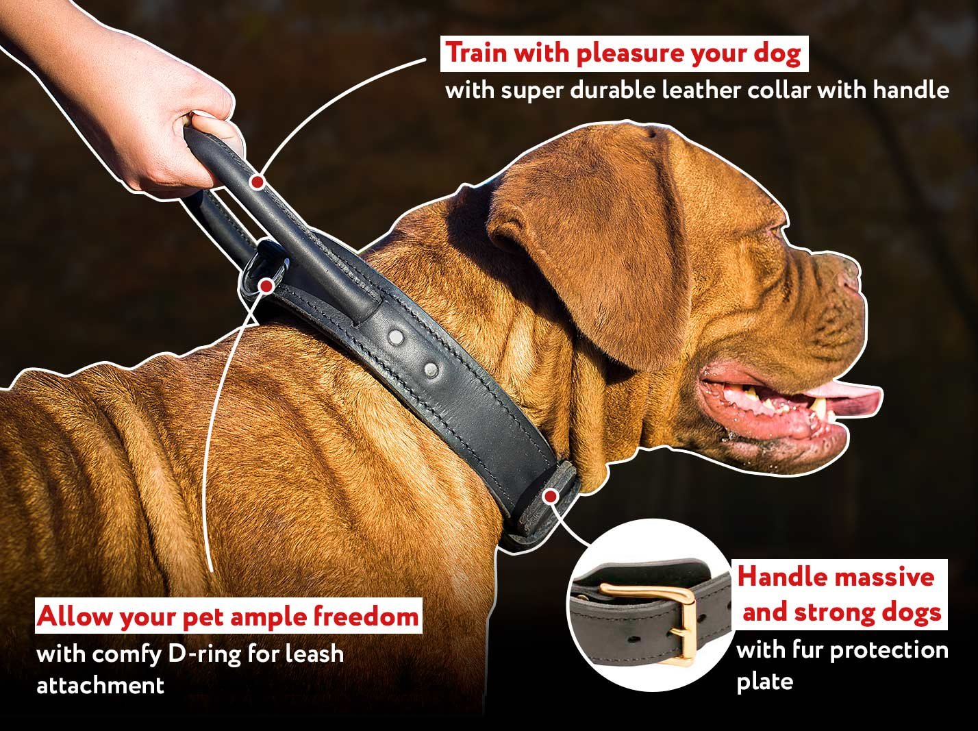 Adjustable Leather French Mastiff Collar with Handle | Brass Hardware